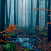 Nature - Autumn Forest