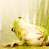 the mighty pomegranate: sexyfrog