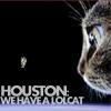 cat: LOLcat