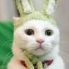 котенок заец