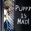 Puppy Is Mad