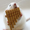 Mouse of the panpipes