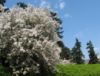 mimosa_trees userpic