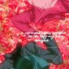 G00 ☆ Lyle/Anew