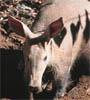 bigroyaardvark userpic