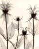 eileen_gray userpic