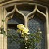 window and rose