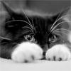 Rialike: Cat
