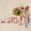 Jessica Ready Forbes: I Has an Apple