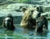 Медведъ