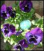 gardeningbabies userpic