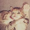 Kitten bite