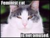 momoshoehle: feminist cat