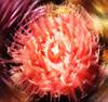 darkanemone userpic