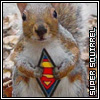 Maz (or foxxy!): Super Squirrel