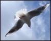 辻 ツバサ: 空&鷹