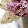 Misora: beltane flowers