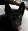 bestestdog userpic