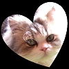 Catmom