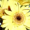 kikis_garden userpic