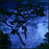 balivatn: rainforest