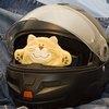 кот в шлеме