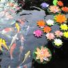 fish pond pic, shanghai