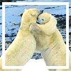 vintageblue2 userpic