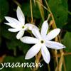 yasaman userpic