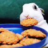 bunny biscuit