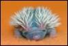 henderhog