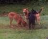 einstein_dogs userpic