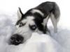 Snow Doggie
