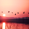 geese and sunset