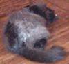 Rowan: Sleepy