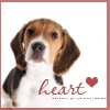 Blue: NF :: Beagle :: Heart