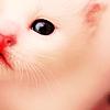 white_kittie