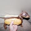 nevcolleil: hot dog!