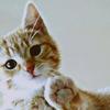 Ceci Kwon: Come my pet take my hand.