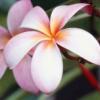 daisy_lola2 userpic