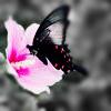 mskimberly userpic
