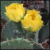 colej55: Cactus