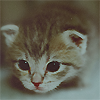 Tima: pic#88860935