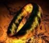 lotr_ring