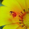 soniclibra userpic