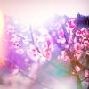 la_romantique userpic