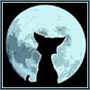 кот_на_фоне_луны