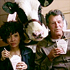 Starrylizard: NT - Fringe Astrid walter cow
