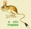 тушкан