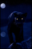 naughty_panther userpic